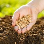 Distribution de semis<br>14 mai, de 12 h à 13 h 30