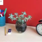 Vente de terrariums : Assainissez votre espace de travail avec un terrarium et contribuer à une bonne cause.